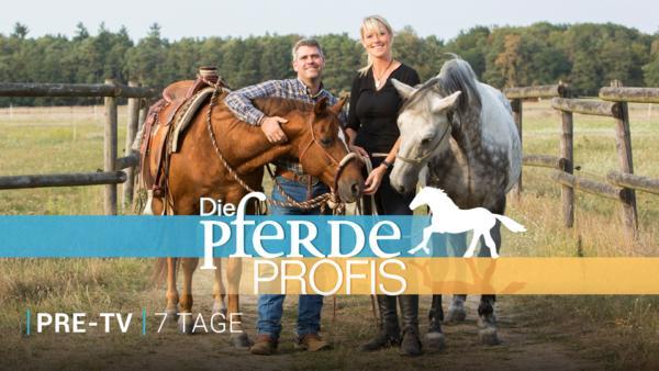 Die Pferdeprofis