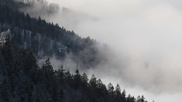 Wildes Deutschland - Der Schwarzwald