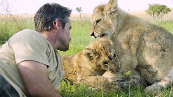 Zwei Löwen auf Reise