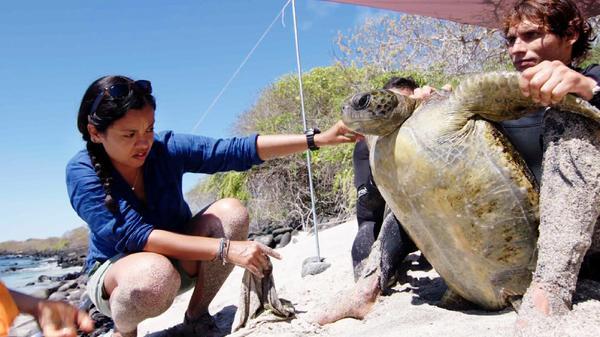 Expedition Galapagos - Rettet das Paradies