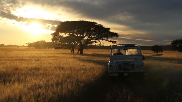 The Serengeti Rules - Die Macht des Gleichgewichts