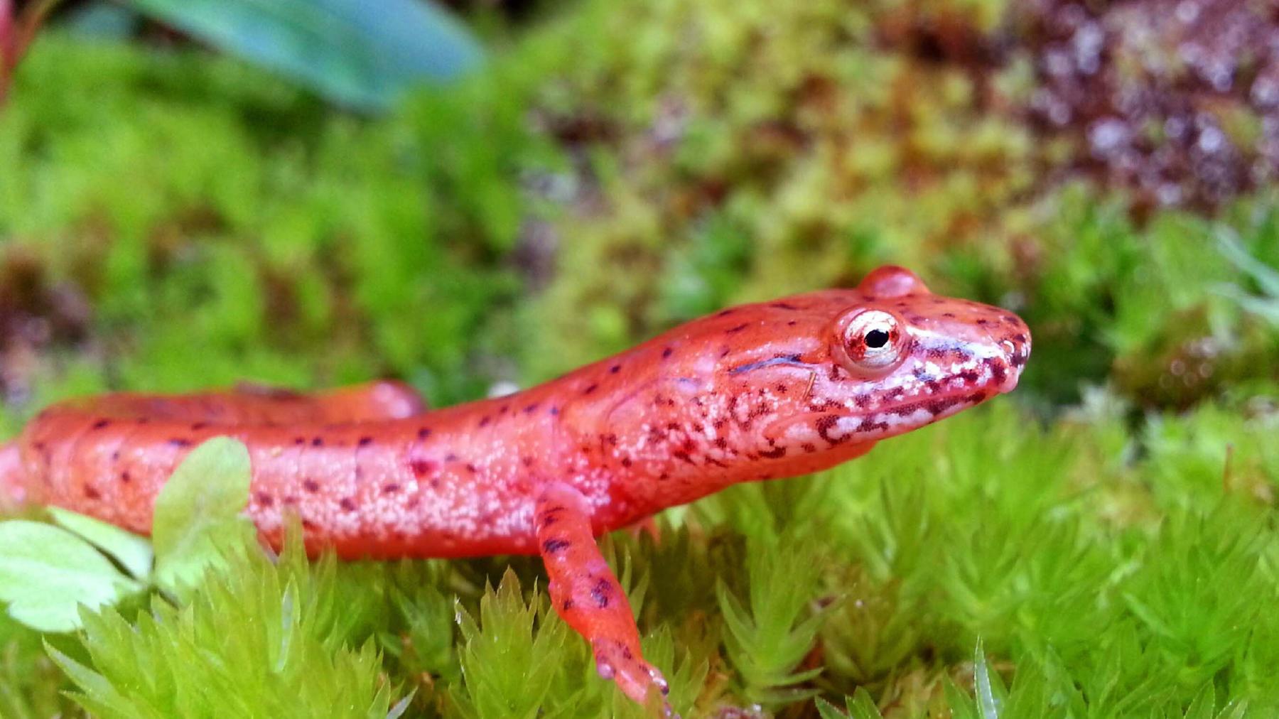 Grenzgänger - Die Welt der Amphibien