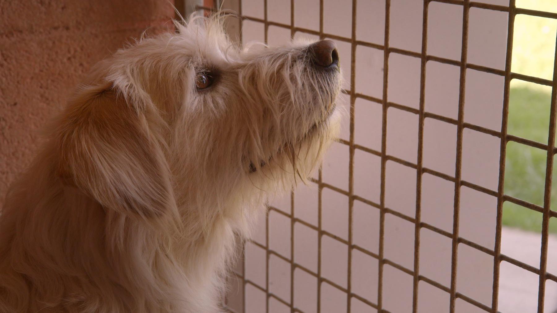 Hunde - Die treuen Gefährten