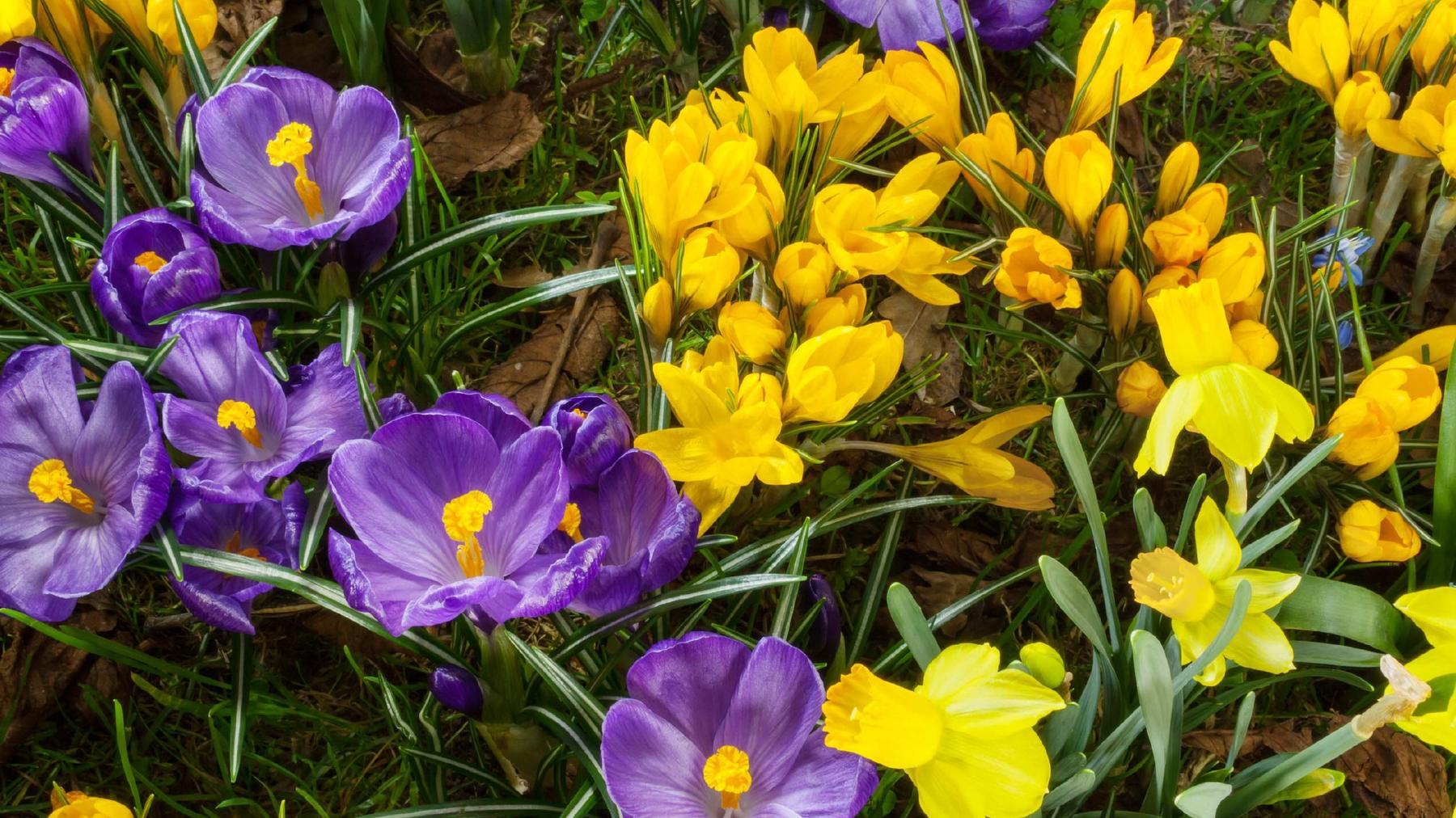 Flower Power - Die grüne Weltmacht