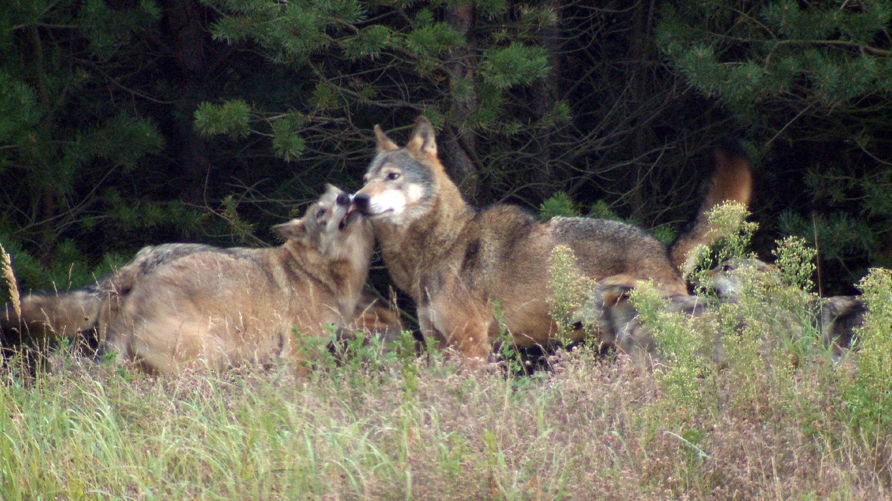 Familie Wolf - Gefährliche Nachbarn