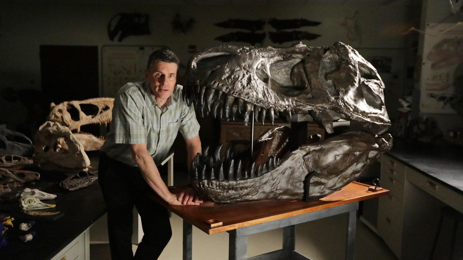 T-Rex - Rekonstruktion einer Riesenechse