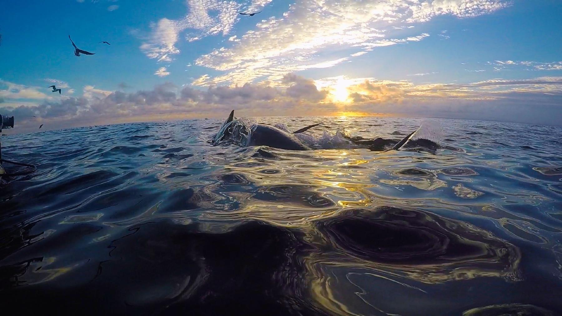 Bluefin - Die Letzten ihrer Art