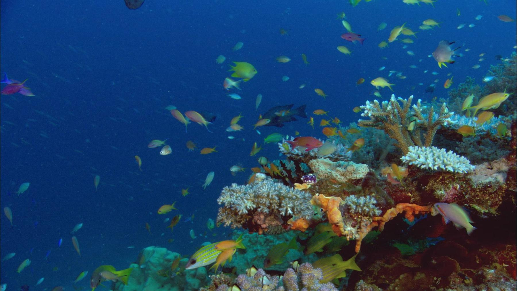 Wunderwelt Pazifik