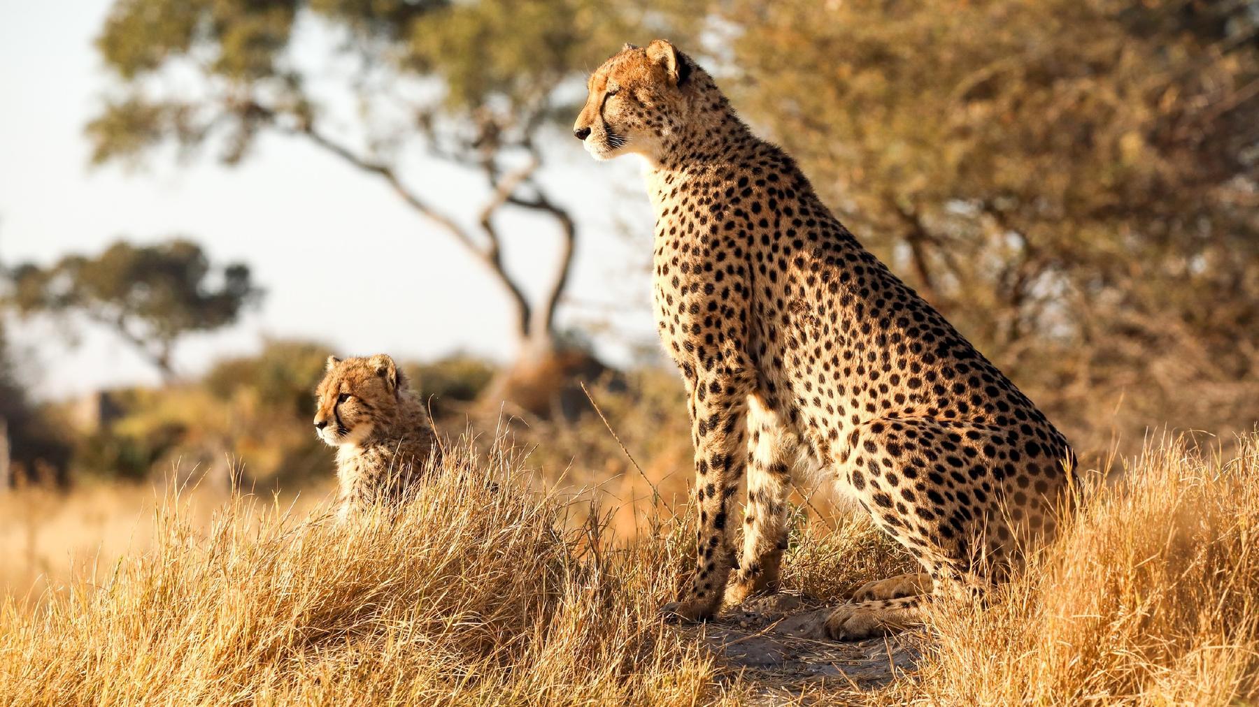 Tödliches Afrika - Tierische Superkräfte