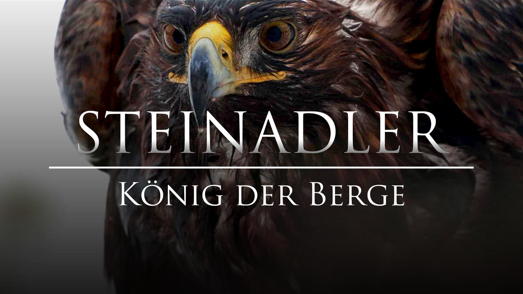 Steinadler - König der Berge