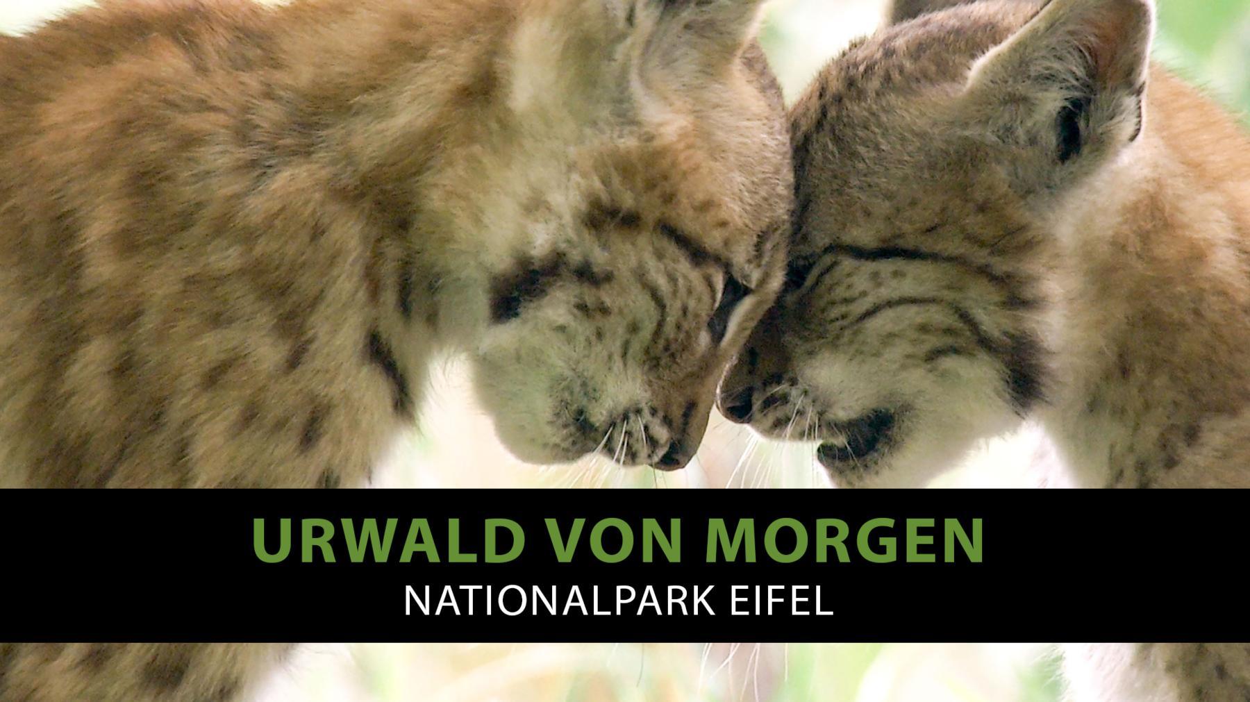 Urwald von morgen - Nationalpark Eifel