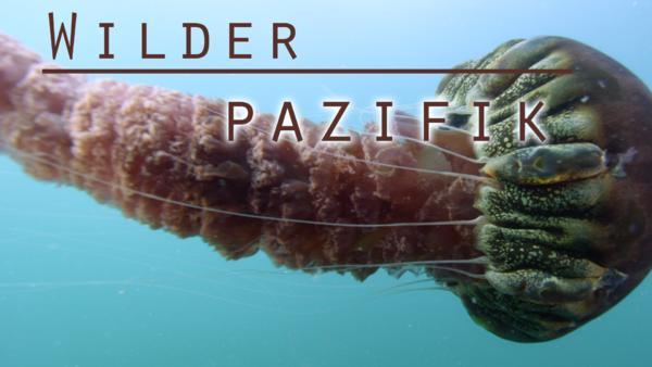 Wilder Pazifik