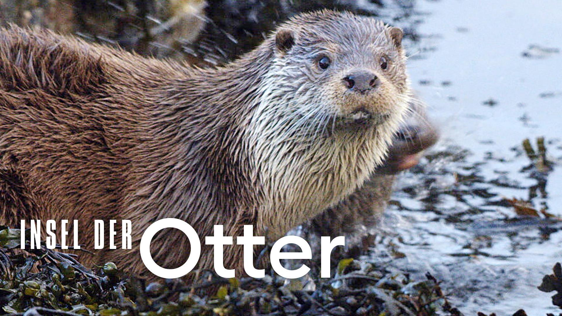 Insel der Otter