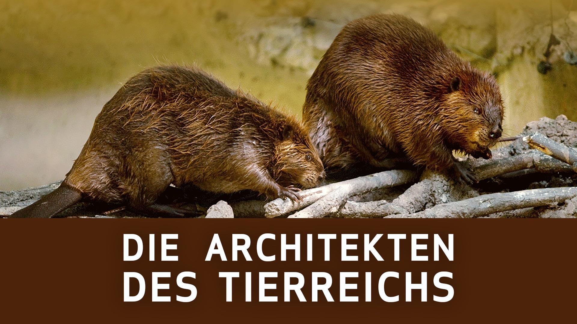 Die Architekten des Tierreichs