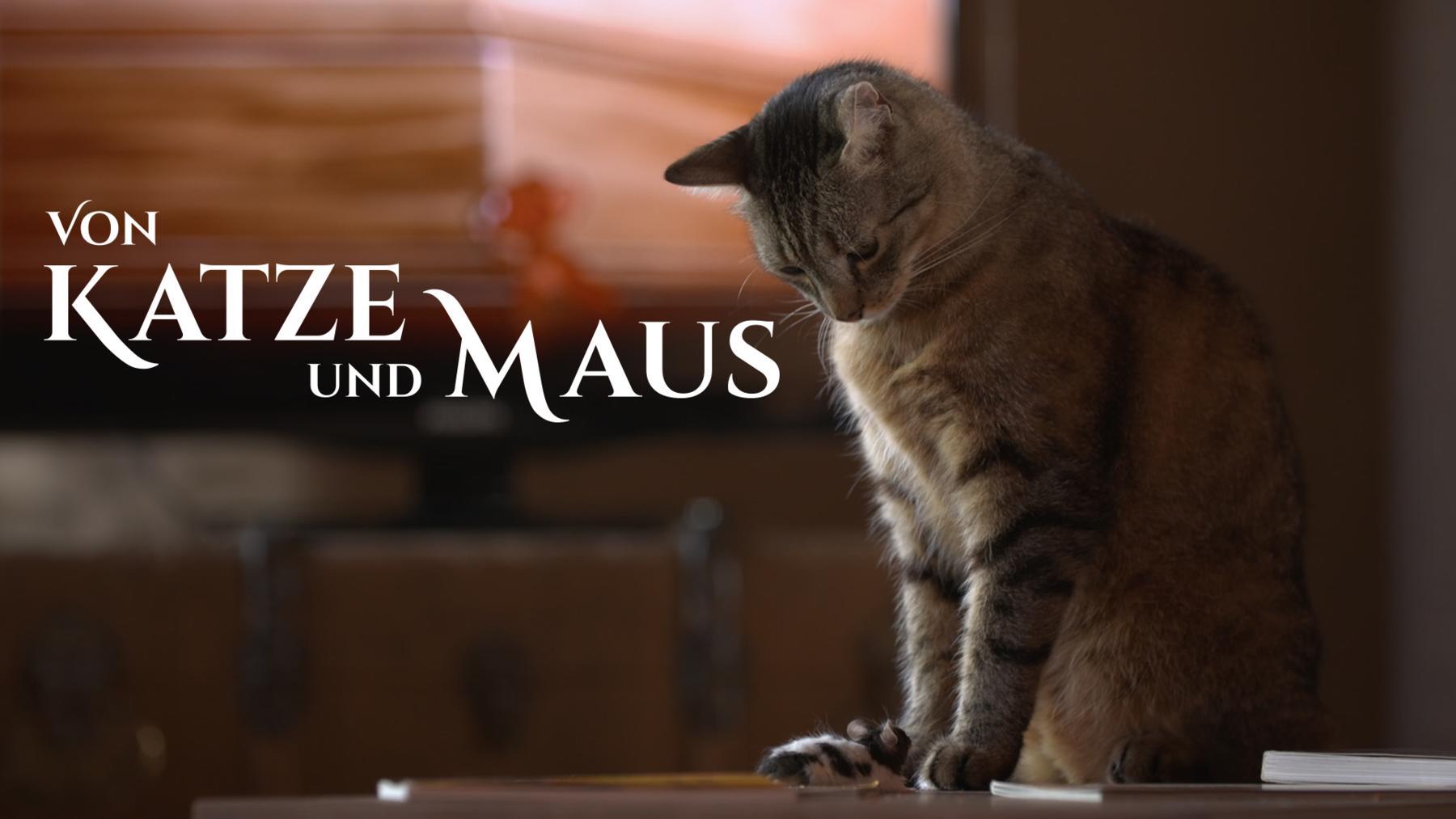 Von Katze und Maus - Das ewige Duell