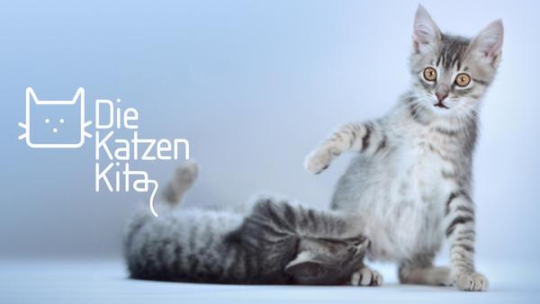 Die Katzen-Kita