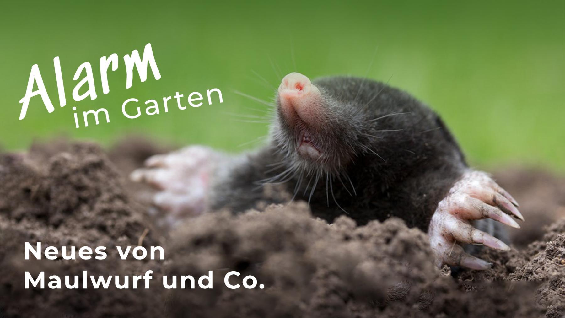 Alarm im Garten - Neues von Maulwurf und Co.