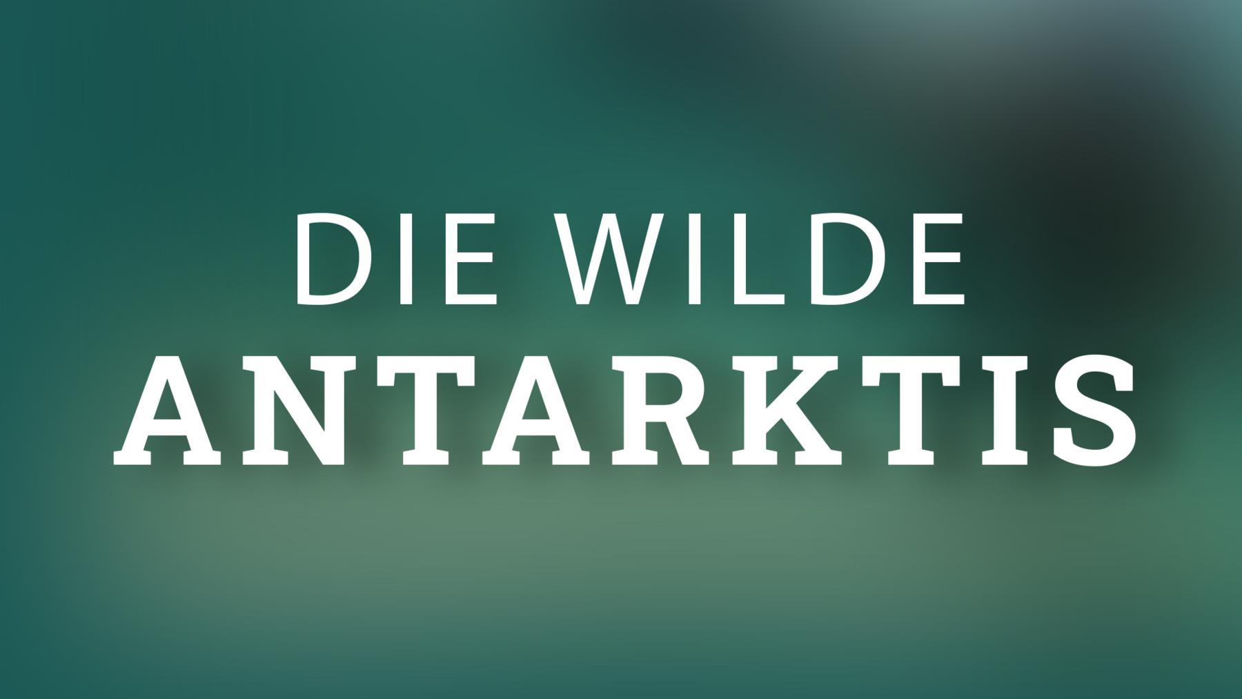 Wilde Antarktis
