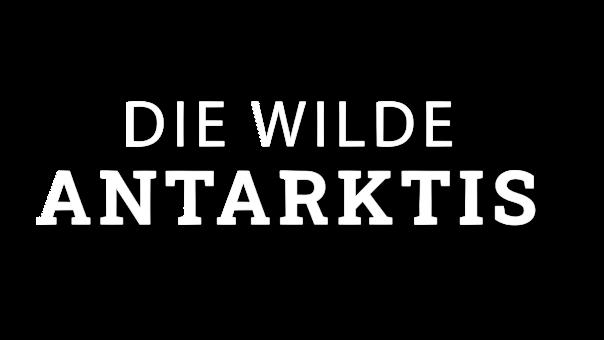 wilde-antarktis