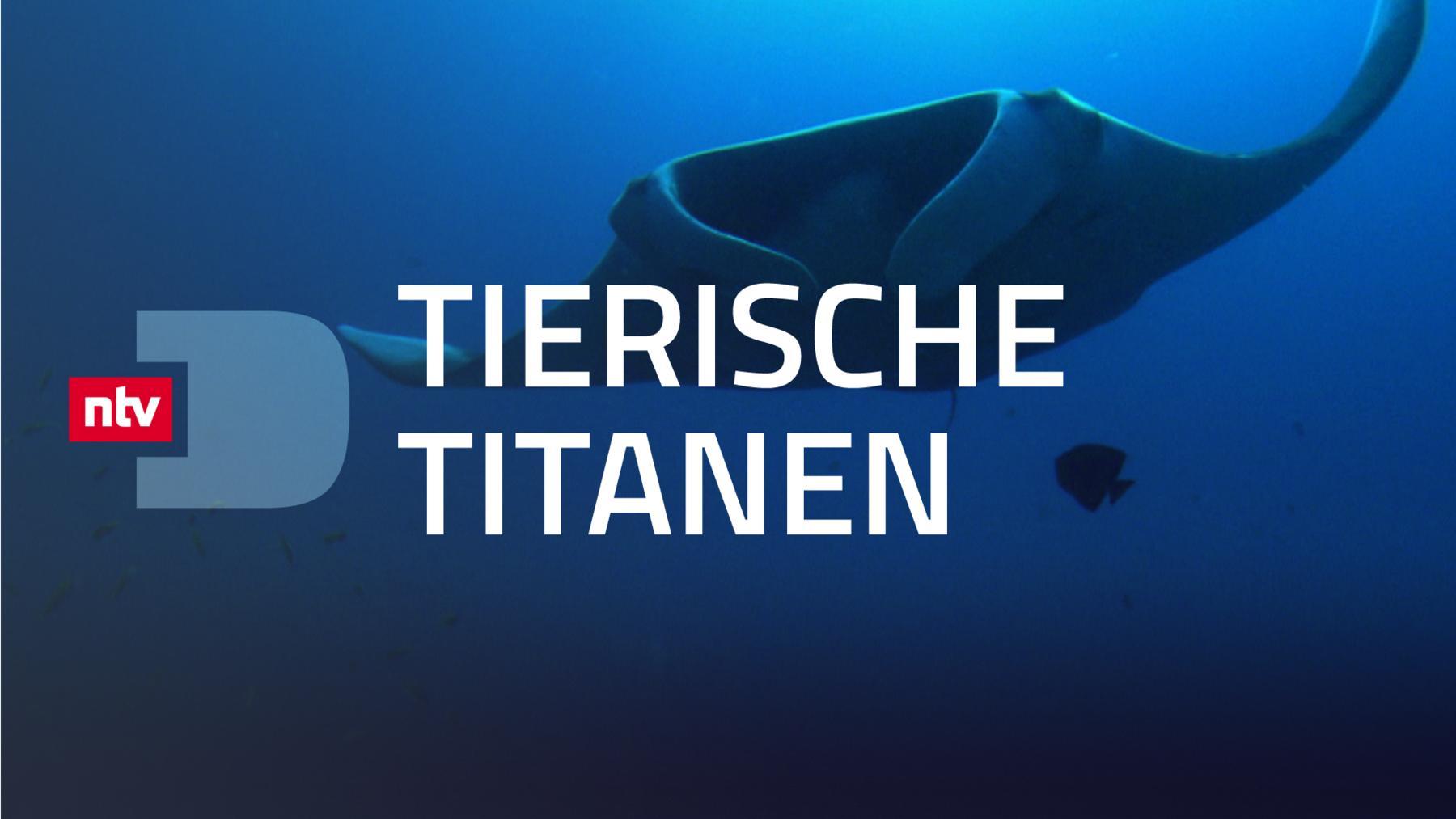 Tierische Titanen