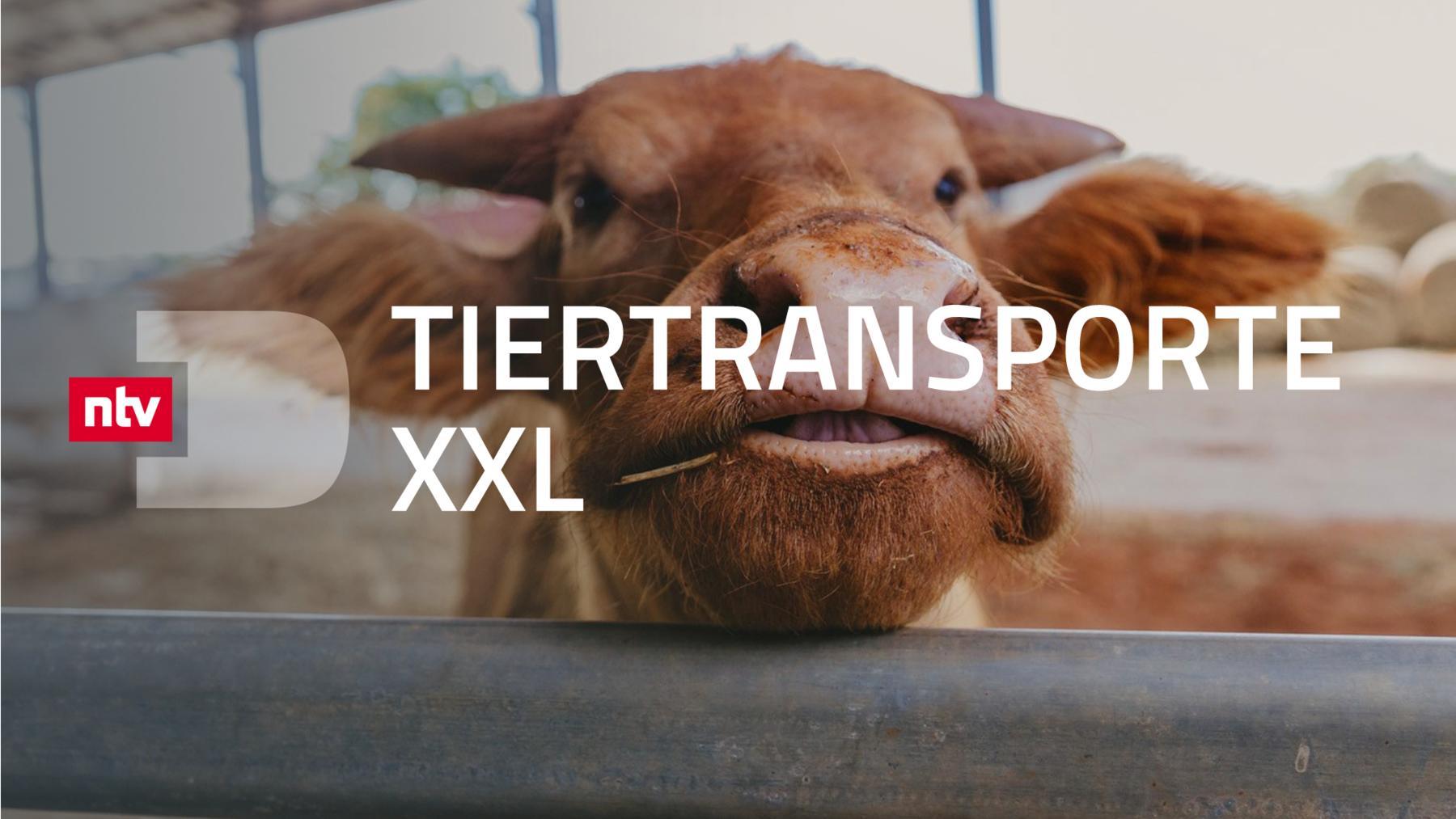 Tiertransporte XXL