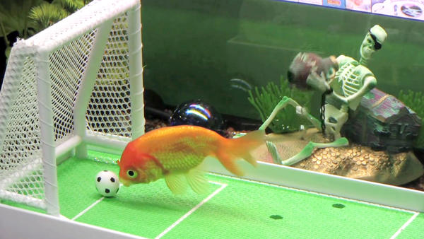 Fisch-Agility