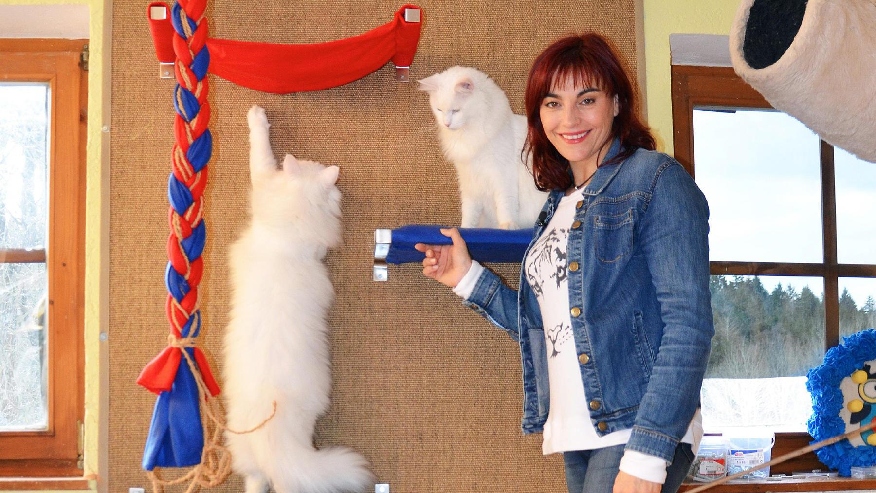 Katzen wollen hoch hinaus | Folge 18