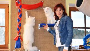 Katzen wollen hoch hinaus