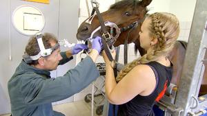 Besuch in einer Pferdeklinik