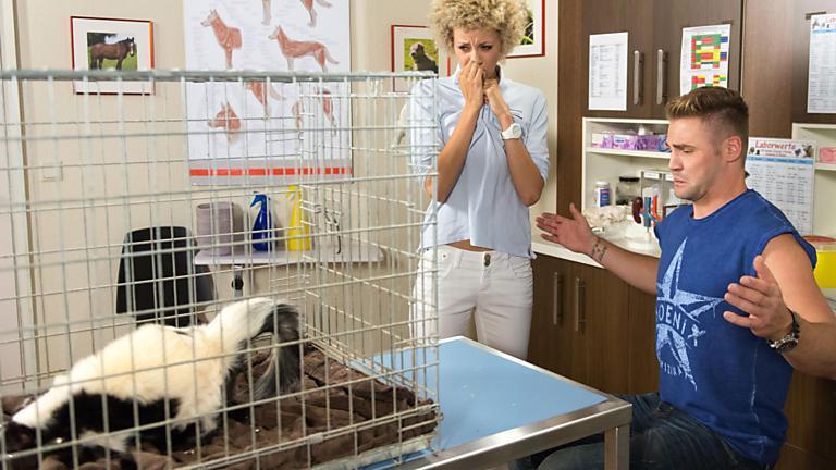 Micki in der Tierarztpraxis