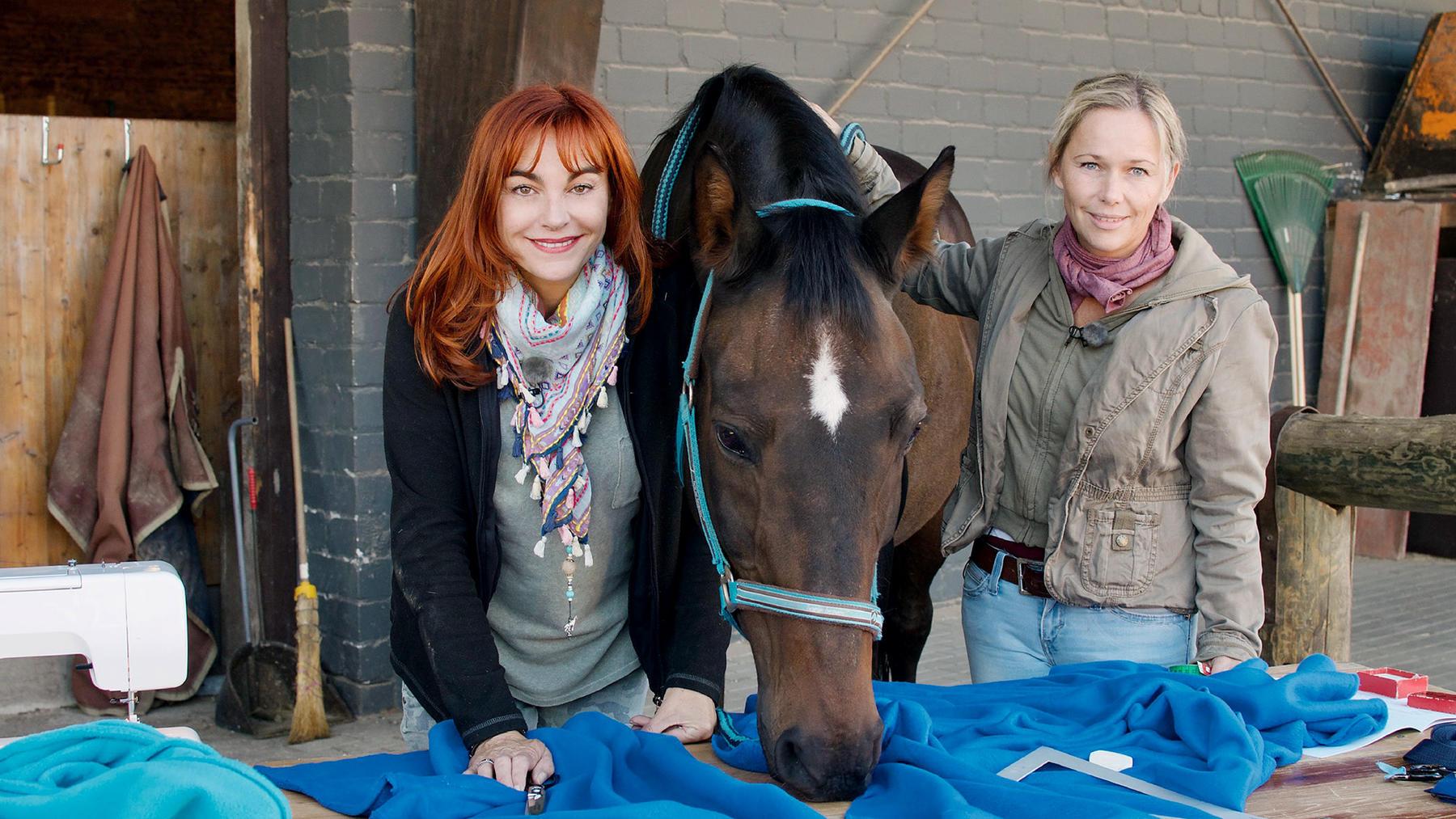 Life-Hacks für Pferde