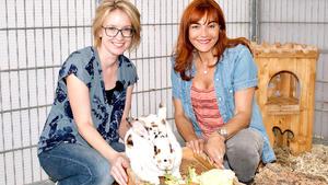 Thema heute u.a.: Ernährungstipps für Kaninchen