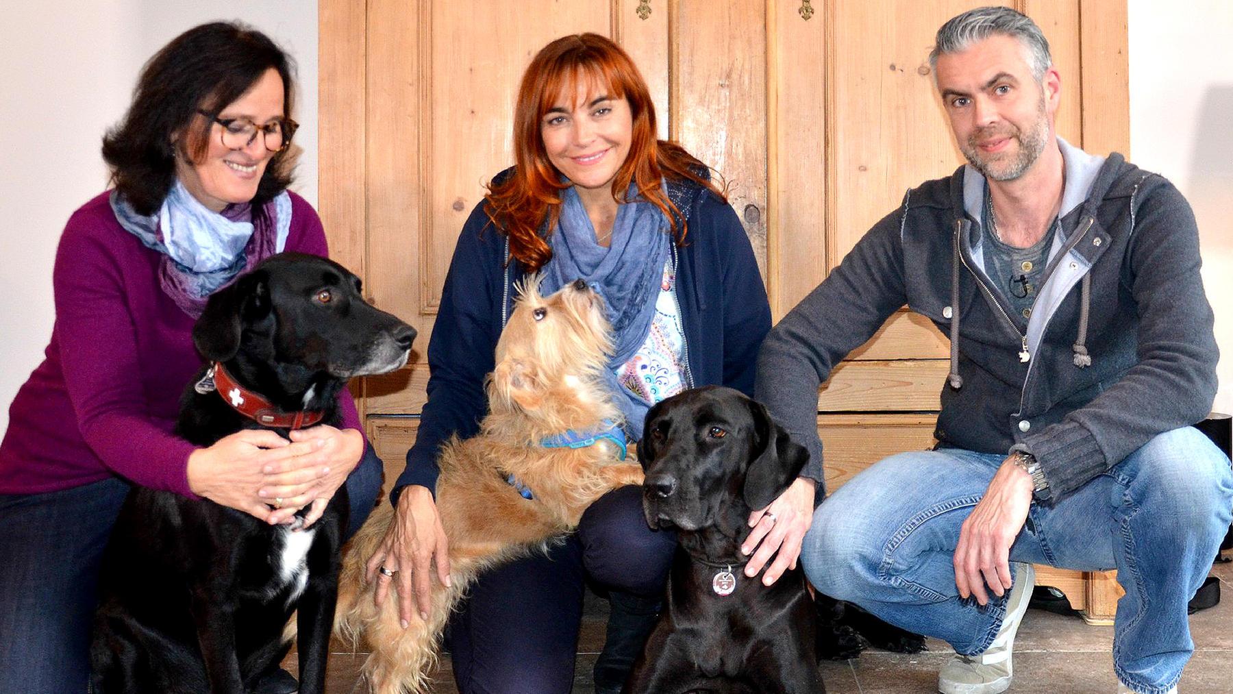 Thema heute u.a.: Silvesterangst beim Hund