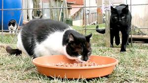 Thema heute u.a.: Streunerkatzen