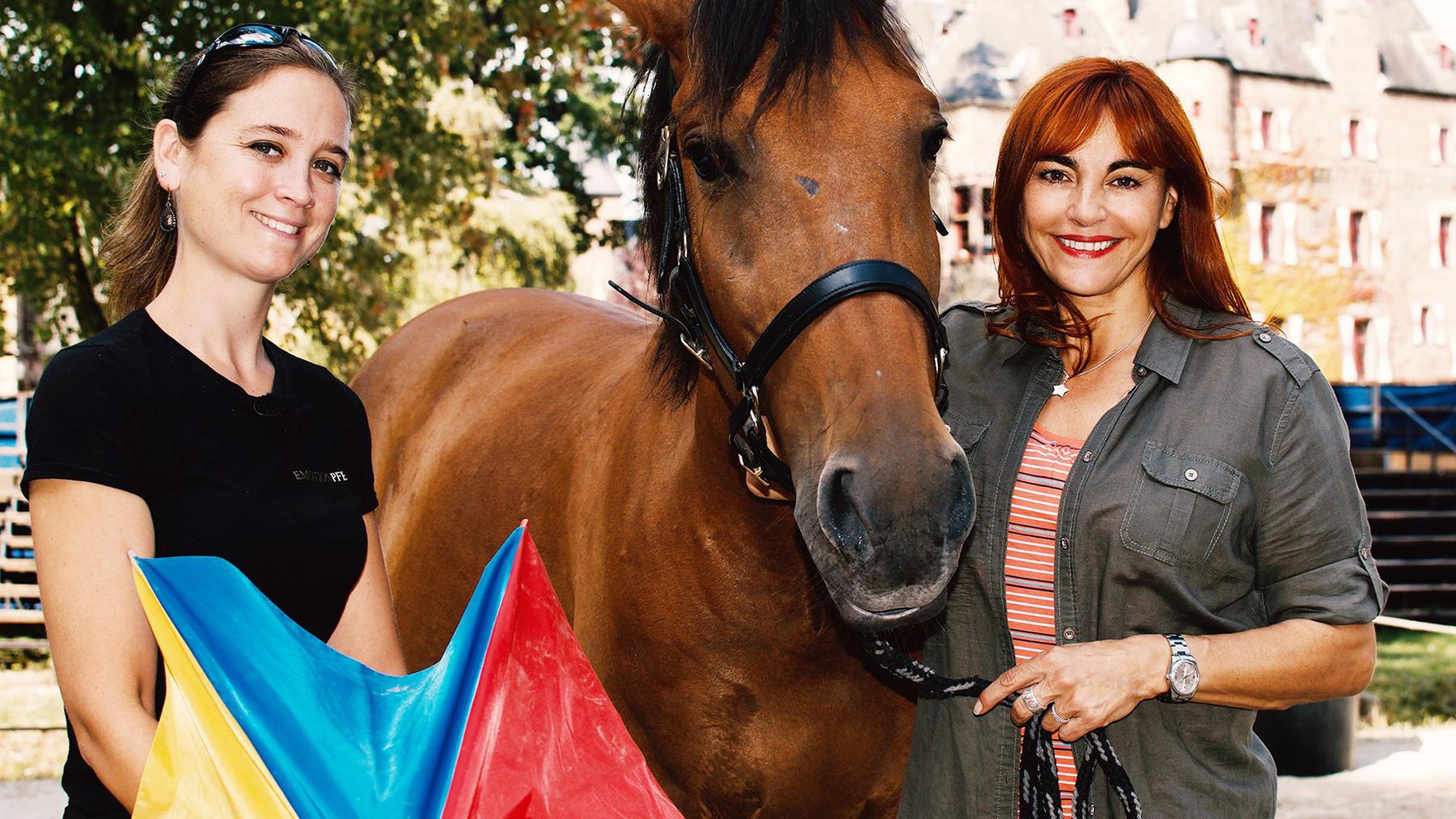 Thema heute u.a.: Gelassenheitstraining für Pferde