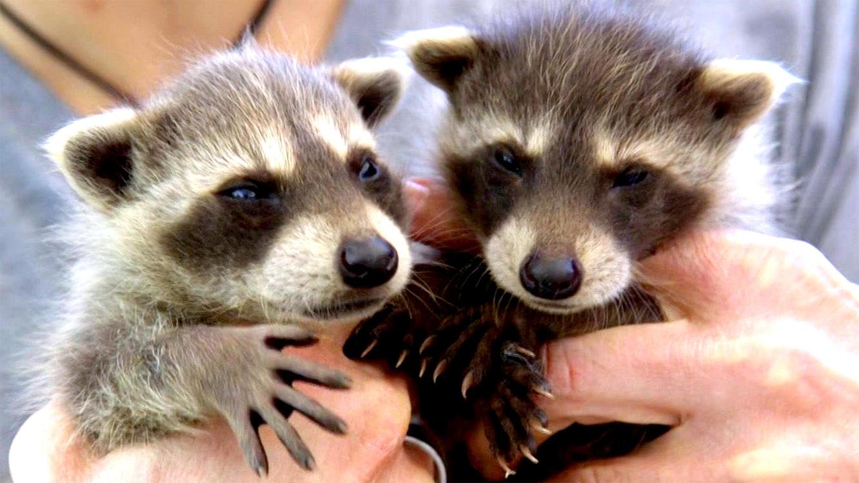 Folge 2 vom 6.06.2020 | Tierbabys - süß und wild! | TVNOW