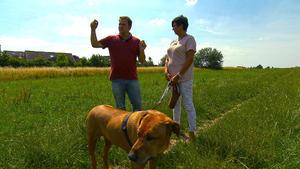"""Heute u.a. mit: Schäferhund """"Feedback"""""""