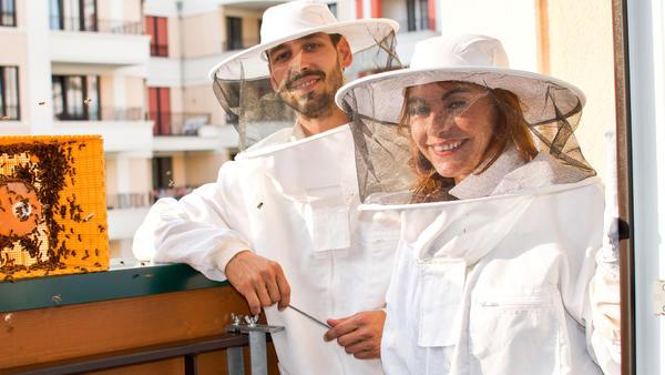 Thema heute u.a.: Bienen in der Stadt