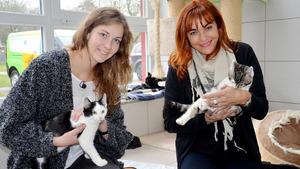 Thema heute u.a.: Kostencheck Katze