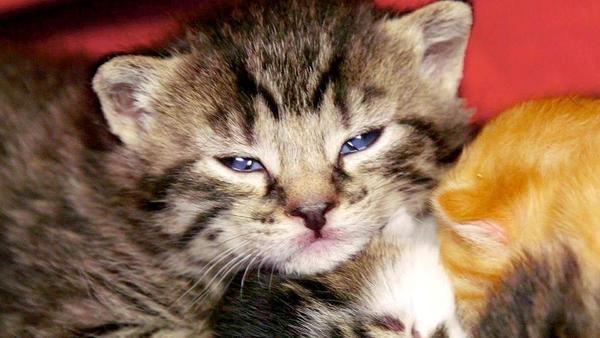 Thema heute u.a.: Rettung für Katzenkinder