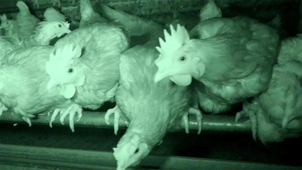 Thema heute u.a.: Nachhaltigkeit - Hilfe für Hühner in Not