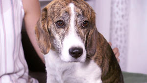 Heute u.a. mit: Celine mit Beagle-Jack Russell Mischling Charly
