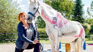 Thema heute u.a.: Pferdefitness! Wie Training Pferde gesund macht