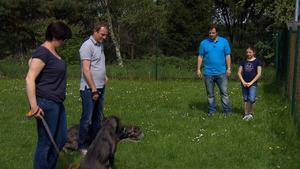 """Bouvier-Rüde """"Thilo"""" / Doggen """"Emma"""" und """"Emil"""""""