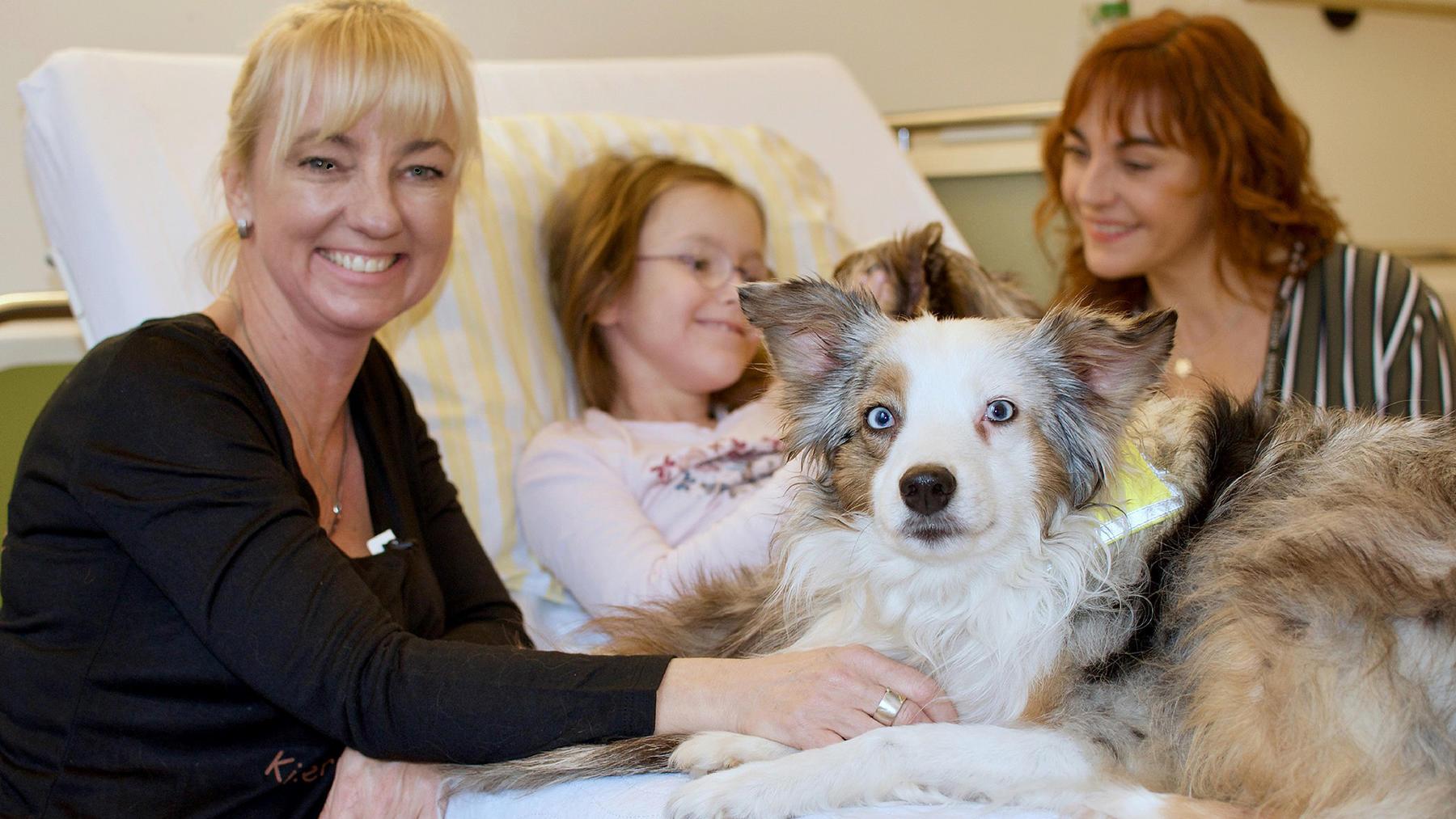 Heute u.a.: Hunde mit Auftrag - Die Krankenhauskuschler   Folge 6