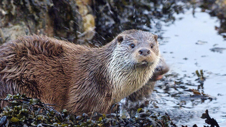 Insel der Otter im Online Stream   TVNOW