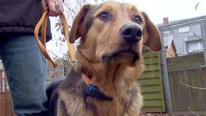 Thema heute u.a.: Dog-Tracker