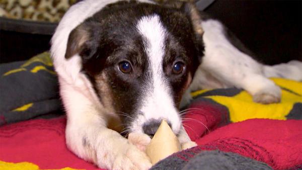 Thema heute u. a.: Beschäftigung für Tierheimhunde