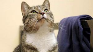 Themen u. a.: Gefängniskatzen und Hundeleinen