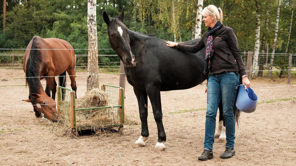 Die Pferdeprofis Kritik